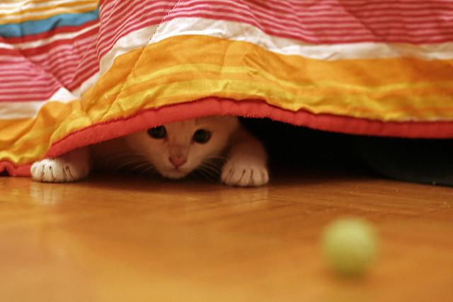 fear, cat hiding, blanket